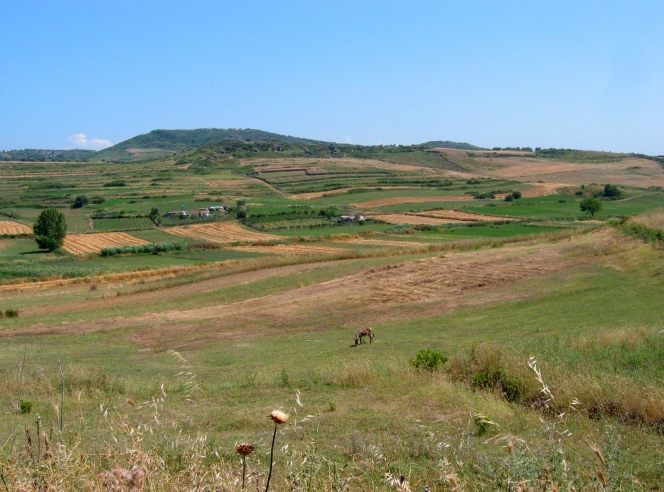 Fields around Apollonia, Albania