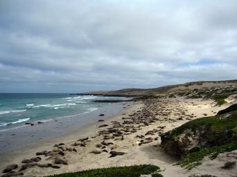 Seals on the beach, San Nicolas Island, CA